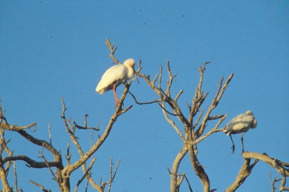 RSA 061 Kruger parc