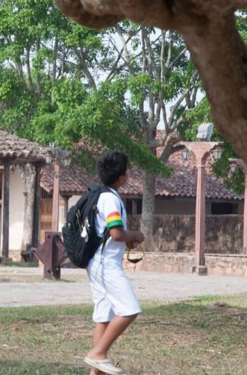 Chasse aux oiseaux sur le chemin de l'école