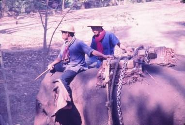 camp d'elephants