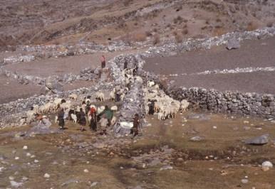 chine 179 bergers