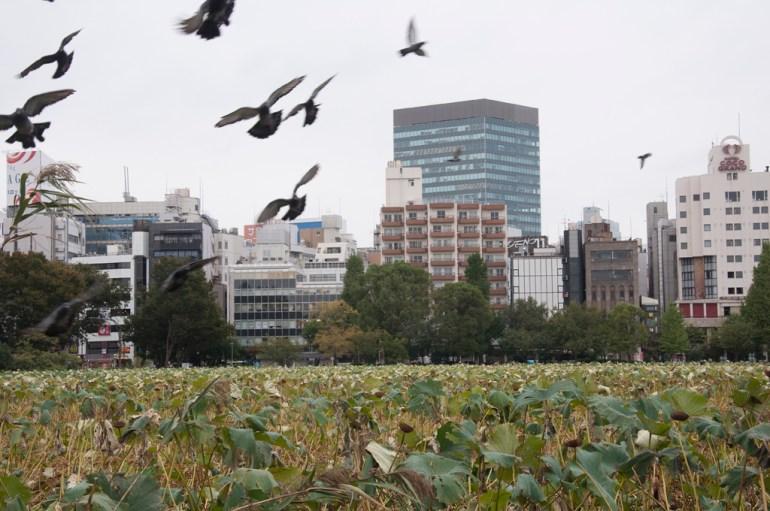 Tokyo Parc Ueno