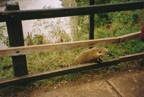Arg 07 Iguazu