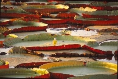 219 br pantanal
