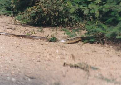 245 Pantanal