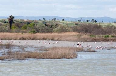 Lac Méjean 2