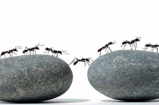 ants-moving-together