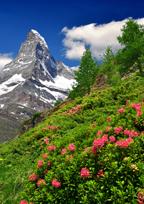 Olbas Remedies From Switzerland