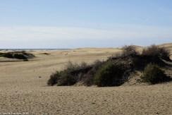 Blick auf die Dünen von Playa de Inglese aus