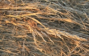 Image result for Straw beds
