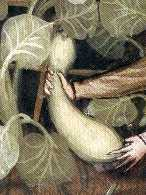 Oldcook : Vegetables in Medieval Europe - Gourd Tacuinum sanitatis