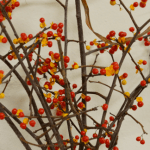 Bittersweet has both winding, pliable tendrils and woody branches. Note the red berries with a yellow outer layer.