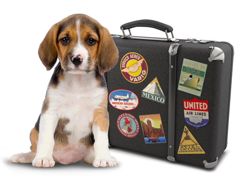 Image result for travel pet