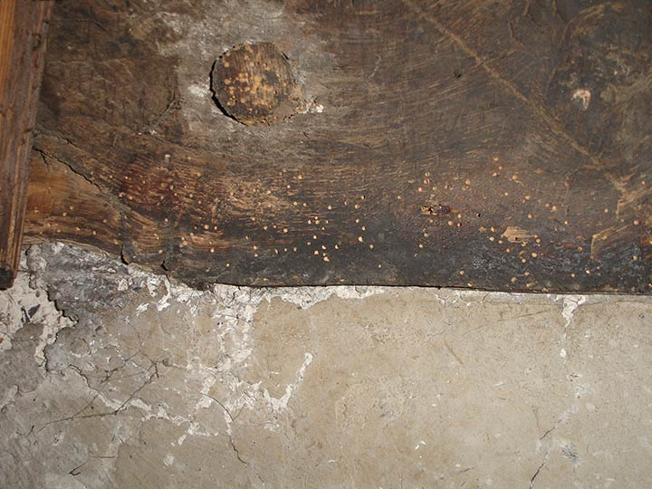 caring woodworm