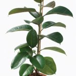 7 Best Houseplants For The Kitchen Old House Journal Magazine