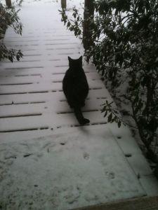 Atlanta Snow Day (photo courtesy Becky Pulley-Ford)