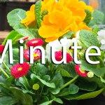 Commiittee Minutes   Old Metairie Garden Club