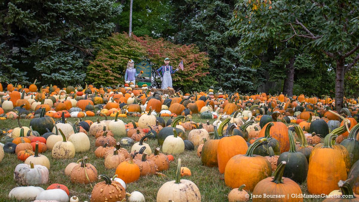 Cory Holman's Pumpkin Patch on the Old Mission Peninsula   Jane Boursaw Photo
