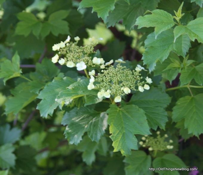 08-Spring Greens 040