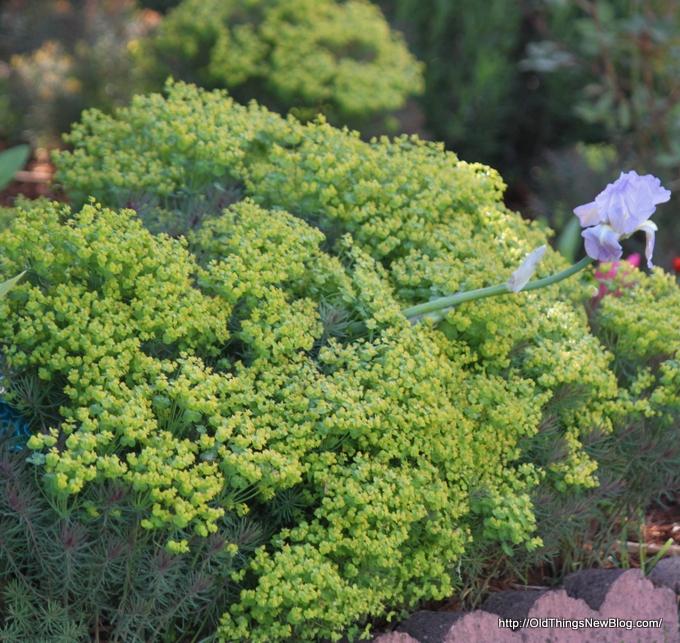 10-Spring Greens 047
