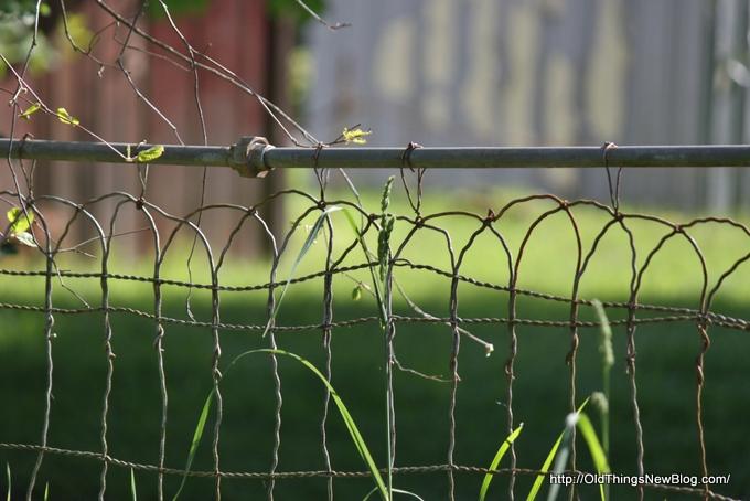 16-Spring Greens 092