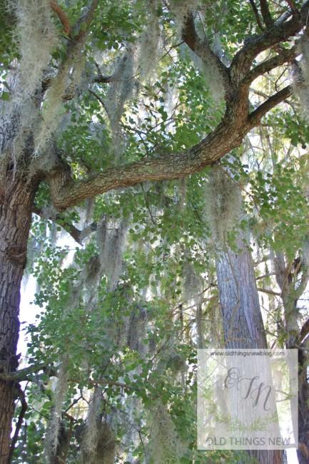Magnolia Plantation 016
