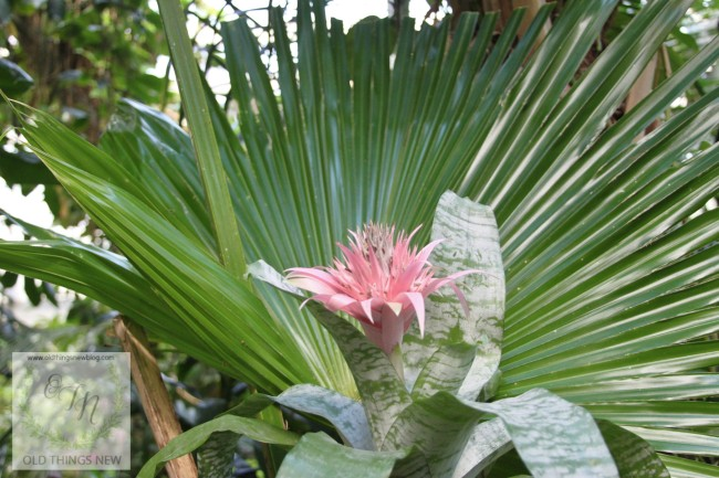 Magnolia Plantation 070