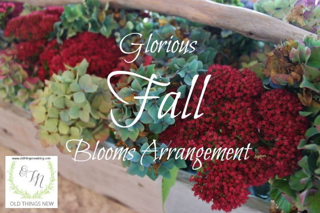 Fall Blooms