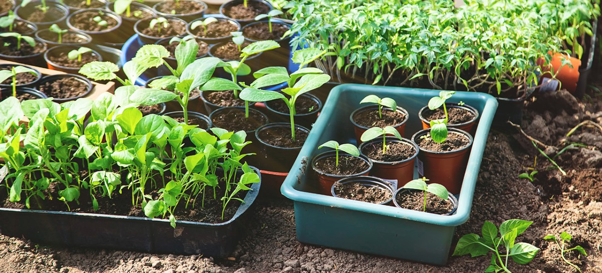 When to start plants outdoors