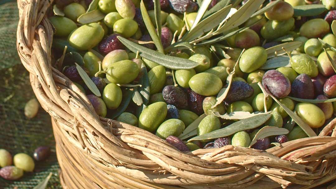 Produttori-olio-extravergine-di-oliva-Ostuni-Puglia