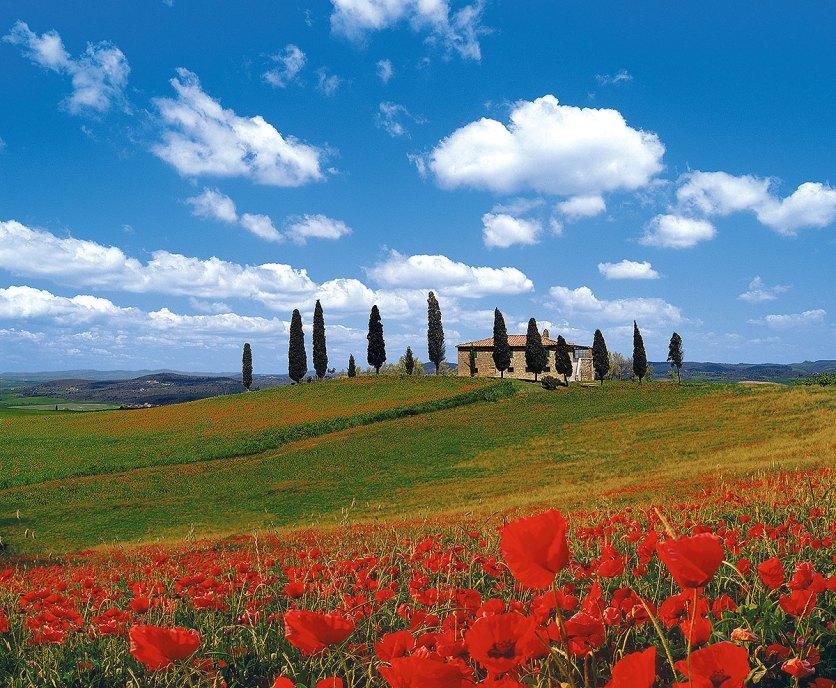 Toskana: Blick auf Zypressen, Mohnblumenfelder. ein Haus und die hügelige Lanschaft