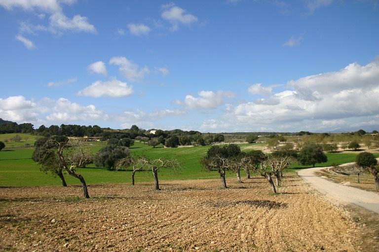 Grünes_Mallorca