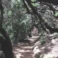 Wanderweg durch den Nebelwald auf La Gomera