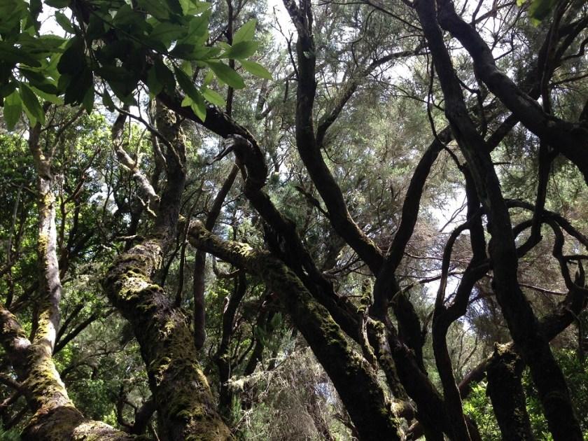Wald und Bäume, La Gomera