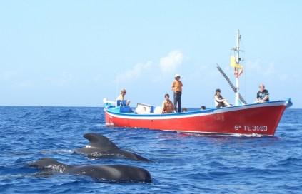 Wale vor einem Walbeobachtungsboot bei La Gomera