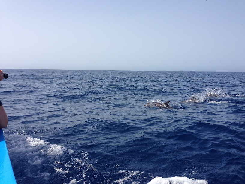 Delfine begleiten Boot