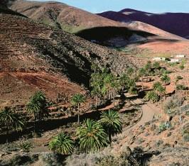 Fuerteventura Straße mit Palmen und Berglandschaft