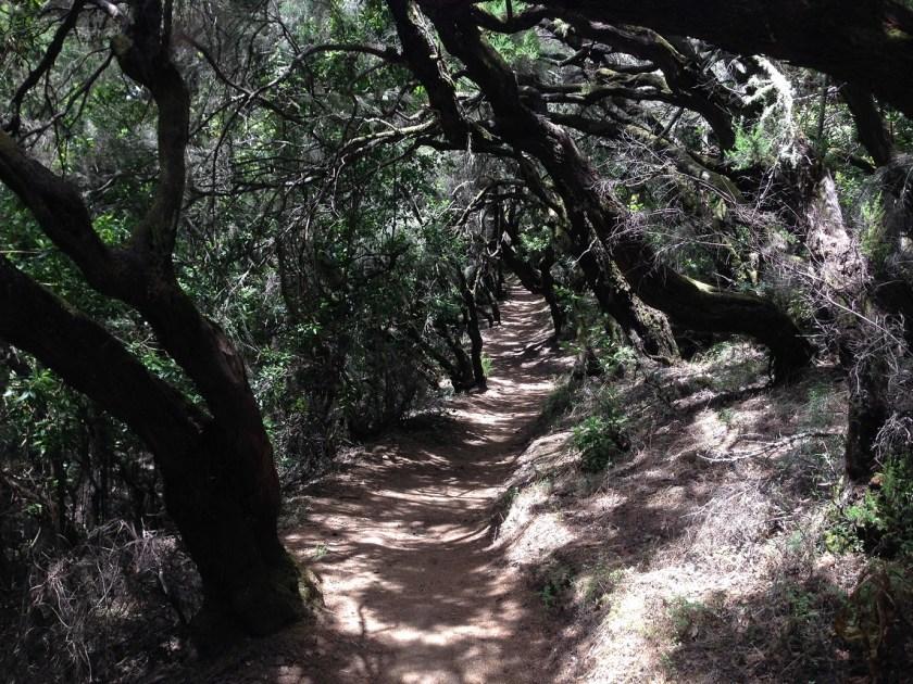 Waldweg auf La Gomera