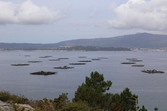 Miesmuschel Zuchtstationen im Meer bei Galicien