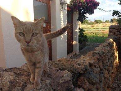 rote Katze auf Mauer