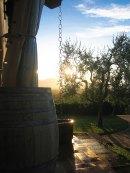 Im Garten des Agriturismo Montalto bei OLIMAR Reisen