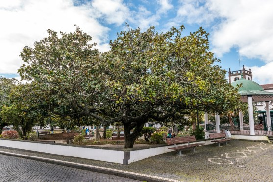 Parkanlage Sao Miguel Azoren