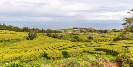 Teeplantage mit Meerblick Azoren