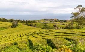 Blick über Teeplantage bis Meer Cha Gorreana Azoren Sao Miguel