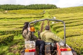 Traktor in Teeplantage Azoren Sao Miguel
