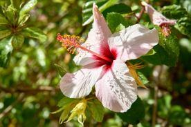 Blume Orchidee Algarve