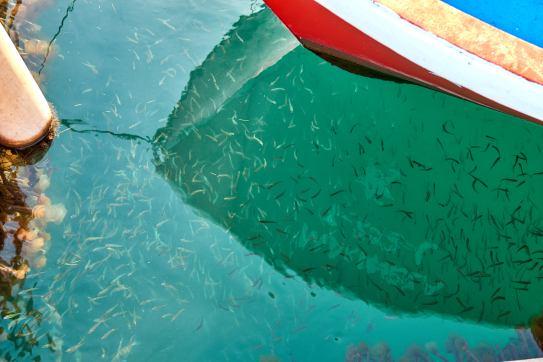Kleine Fische im Hafen Santa Luzia Algarve