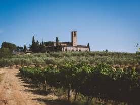 Blick auf Weinreben und Olivenbäume und toskanische Häuser