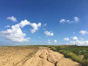 Portugiesischer Jakobsweg Feld Acker Praia da Araia Branca