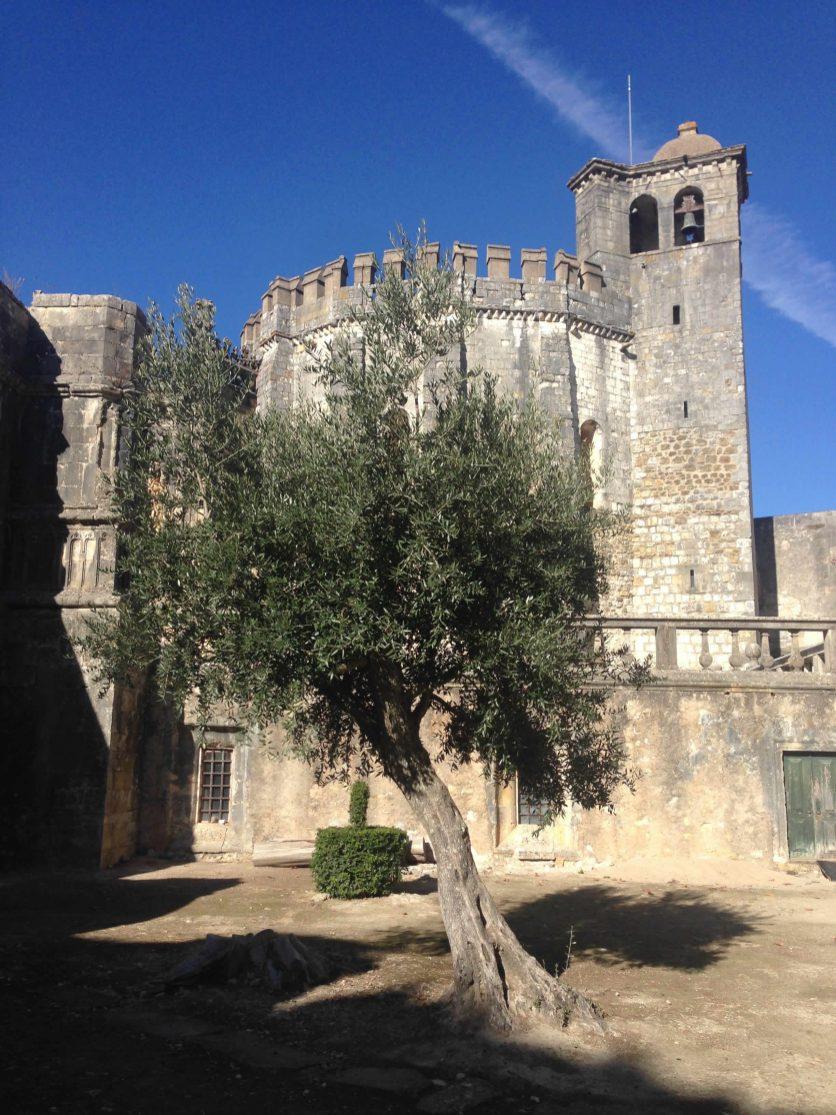 Olivenbaum in Burganlage Tomar