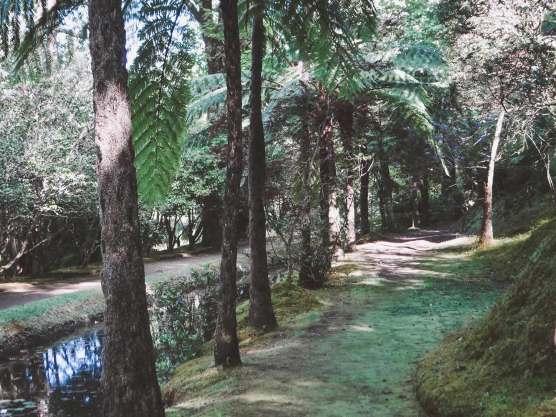 Bäume im Terra Nostra Park